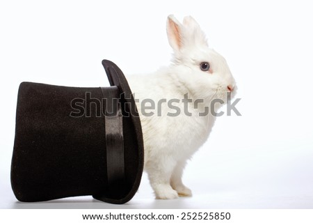 Magical rabbit. Side view image of a cute white bunny looking out from the magicians black hat isolated on white background - stock photo