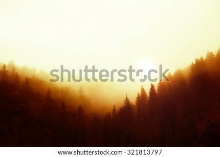 Magical sunset over misty pine tree forest