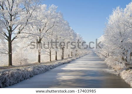 Magical winter landscape in which trees are covered with snow