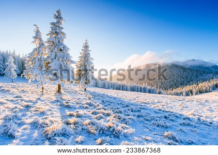 magical winter snow covered tree  - stock photo