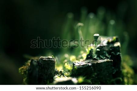 magical world of macro moss - stock photo