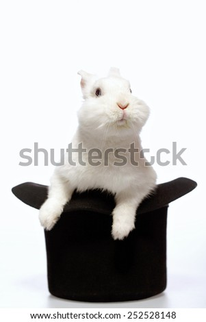 Magicians rabbit. Closeup image of a cute white bunny looking out from the magicians black hat isolated on white background  - stock photo