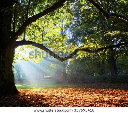 magnificent ancient oak in forest - stock photo