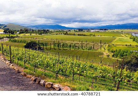 Magnificent beautiful landscape view of vineyards in California Napa Valley wine country