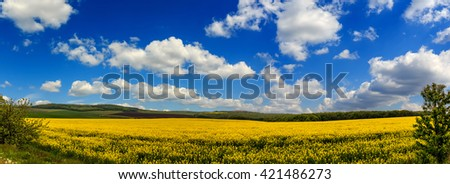 Magnificent views of the endless canola field glowing by sunlight. blue sky and white clouds. Dramatic picture and picturesque scene. panorama