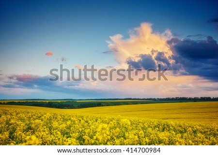 Magnificent views of the endless canola field glowing by sunlight. Dramatic picture and picturesque scene. Location place Ukraine, Europe. Artistic picture. Beauty world. Soft filter effect. - stock photo