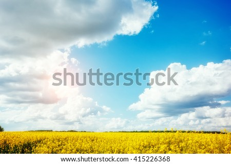 Magnificent views of the endless canola field on a sunny day. White fluffy clouds. Picturesque and gorgeous scene. Location place Ukraine, Europe. Artistic picture. Beauty world. - stock photo