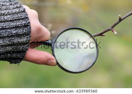 Magnifying glass in hand of the gardener in the spring / careful inspection seedlings
