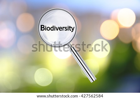 Magnifying lens over background with text Biodiversity, with the blurred lights visible in the background. 3D rendering. - stock photo