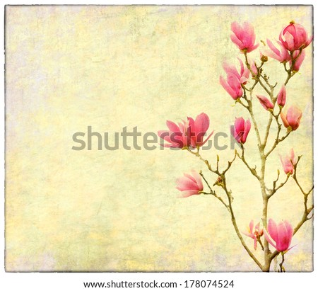 magnolia flowers on old paper background