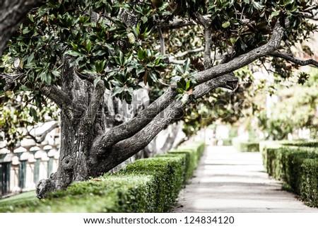 Magnolia tree in botanical garden in Spain ( HDR image ) - stock photo