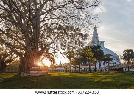 Mahatupa big Dagoba in Anuradhapura and old tree at sunset, Unesco, Sri Lanka, Asia - stock photo
