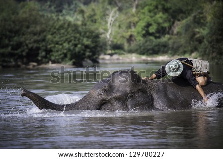Mahout bathing his elephant in the river