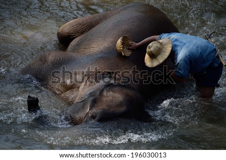 Mahout is cleaning Elephant splashing with water while taking a bath