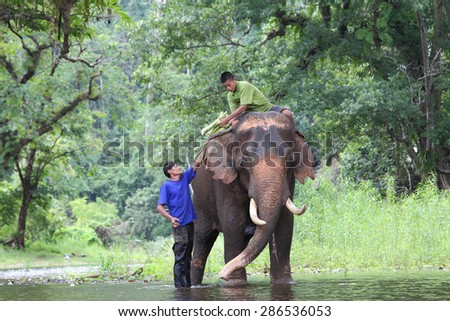 Mahout young boy and elephant in the forest at Kanchanaburi province in Thailand on May 24, 2015 :Thailand have several elephant camps  and special training mahout courses.