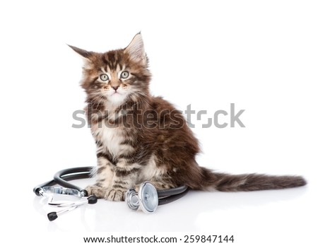 maine coon cat with a stethoscope. isolated on white background - stock photo