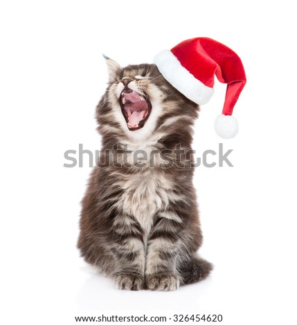 Maine coon cat with open mouth  in red santa hats. isolated on white background - stock photo