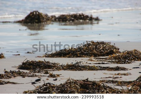 Maine ocean with seaweed