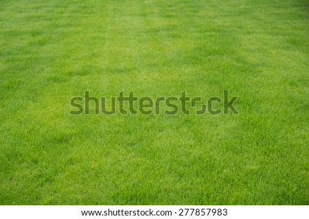 maintained green grassy area / grass