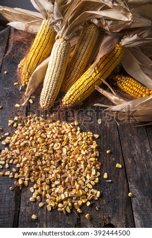 Maize cobs whole dried and ready for grinding - stock photo