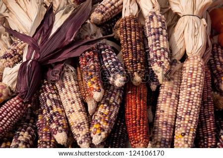 Maize corn - stock photo