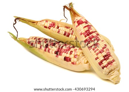 Maize corns isolated on a white background. - stock photo