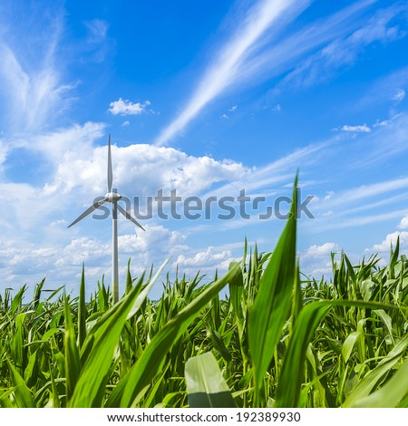 maize field agriculture landscape with wind turbine Alternative Energy - stock photo