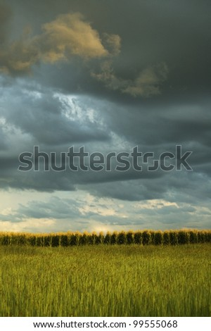 Maize fields during a thunderstorm - stock photo