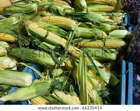 Maize kernels at the market - stock photo