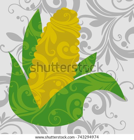 Maize or Corn on Gray background, known in some English-speaking countries as corn, is a large grain plant