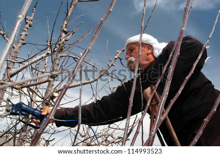 MAJDAL SHAMS-AUGUST 23:A Druze man works in the field in Majdal Shams,Israel on August 23 2009.The number of Druze people worldwide exceeds one million. The vast majority residing in the Middle East
