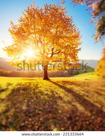 Majestic alone beech tree on a hill slope with sunny beams. Dramatic colorful morning scene. Red and yellow autumn leaves. Carpathians, Ukraine, Europe. Beauty world. Tilt Shift blur effect. - stock photo