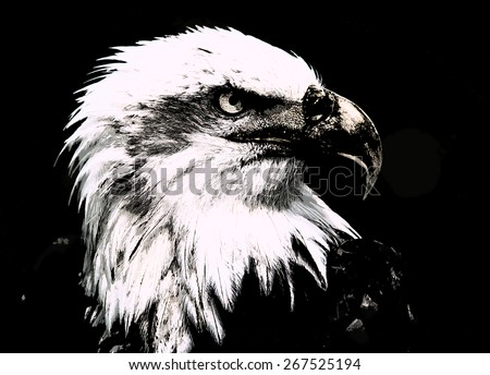 Majestic bald  Eagle Portrait on green - stock photo