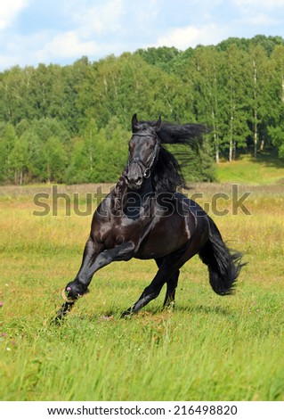 Majestic black horse galloping across the field on forest background - stock photo