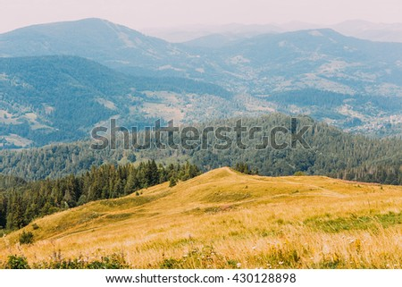 Majestic carpathian pine forest hills landscape with yellow meadow at foreground - stock photo