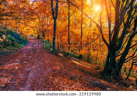 Majestic colorful forest with sunny beams. Natural park. Dramatic morning scene. Red autumn leaves. Carpathians, Ukraine, Europe. Beauty world. - stock photo