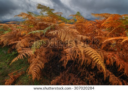 Majestic fern leaves with a cloudy sky on a mountain valley. Dramatic colorful evening scene. Carpathians, Ukraine, Europe. - stock photo