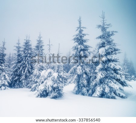 Majestic foggy landscape in the morning. Dramatic and picturesque wintry scene. Location Carpathian, Ukraine, Europe. Beauty world. Retro and vintage style, Instagram toning effect. Happy New Year! - stock photo