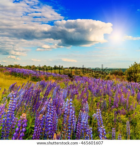 majestic landscape. Fantastic sunny day with flowering hills in the warm sunlight in the twilight. dramatic sky. beautiful morning scene. wonderful blooming field. soft selective focus