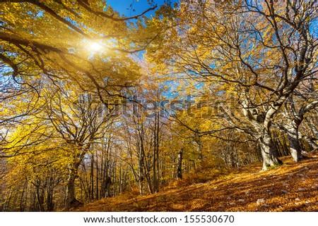 Majestic morning colorful forest. Autumn leaves. Crimea, Ukraine, Europe. Beauty world. - stock photo