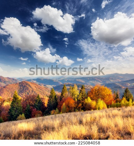 Majestic particolored forest with sunny beams. Natural park. Dramatic unusual scene. Red and yellow autumn leaves. Carpathians, Ukraine, Europe. Beauty world. - stock photo