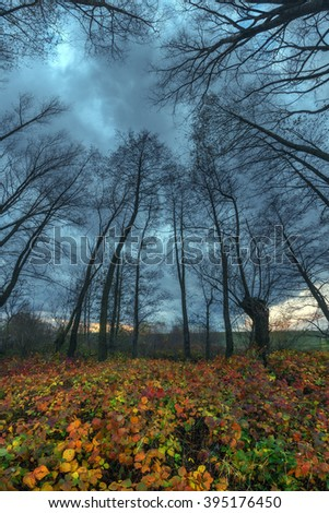 Majestic tree with a cloudy sky on a forest. Dramatic colorful evening scene. Carpathians, Ukraine, Europe.