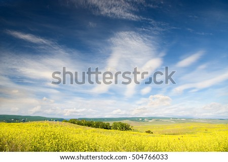 Majestic view in the mountains landscape.flowers on summer meadow amid the majestic mountain scenery.Meadow of rape.