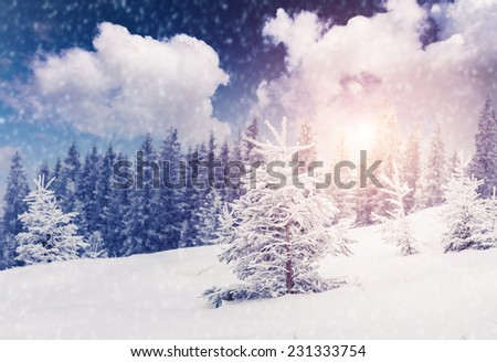 Majestic winter landscape glowing by sunlight. Dramatic wintry scene. Carpathian, Ukraine, Europe. Beauty world. Retro vintage filter. Instagram toning effect. Happy New Year! - stock photo
