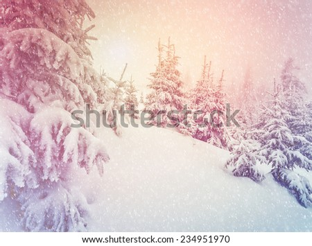 Majestic winter landscape glowing by sunlight. Dramatic wintry scene. Carpathian, Ukraine, Europe. Beauty world. Retro filter. Instagram toning effect.  - stock photo