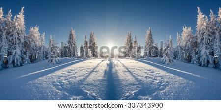 Majestic winter landscape glowing by sunlight in the morning. Clear blue sky. Dramatic and picturesque wintry scene. Location  Carpathian, Ukraine, Europe. Double exposure effect. Beauty world.  - stock photo