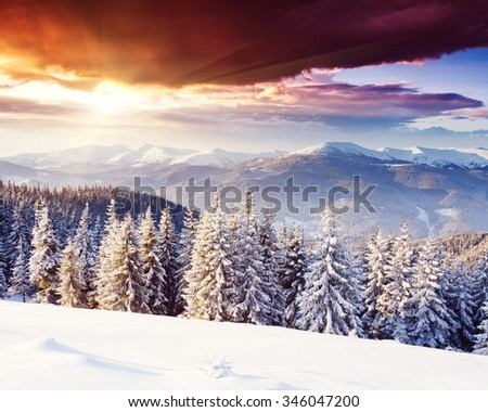 Majestic winter landscape glowing by sunlight in the morning. Dramatic wintry scene. Location Carpathian, Ukraine, Europe. Beauty world. Happy New Year! - stock photo