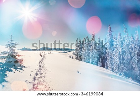 Majestic winter landscape glowing by sunlight in the morning. Dramatic wintry scene. Location Carpathian, Ukraine, Europe. Beauty world. Bokeh light effect, soft filter. Instagram toning effect. - stock photo