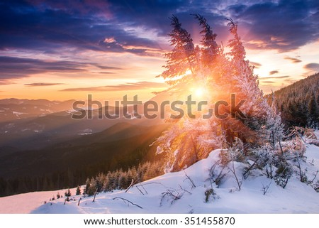 Majestic winter landscape glowing by sunlight in the morning. Dramatic wintry scene. View of snow-covered conifer trees  at sunrise. Merry Christmas's or New Year's background. - stock photo