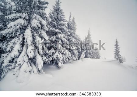 Majestic winter landscape in foggy weather. Dramatic wintry scene. Location Carpathian national park, Ukraine, Europe. Ski resort. Beauty world. Instagram toning effect. Happy New Year! - stock photo